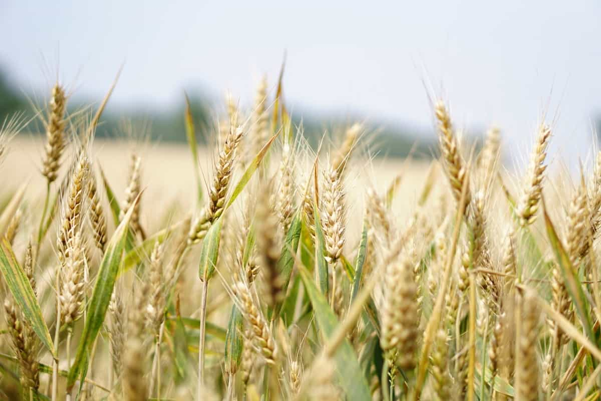 It's Time for Agricultural Commodities Sector to Play Catch-Up